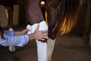 Gezondheid Paard