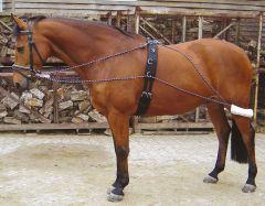 Harry's Horse Longeerhulpteugel