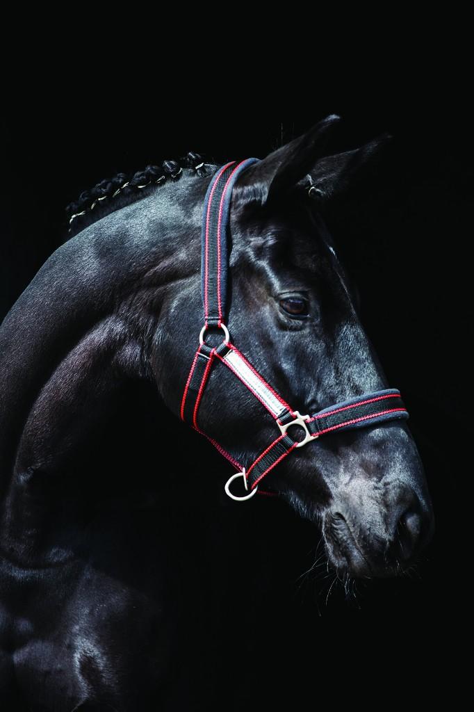 Horseware Rambo Padded Headcollar