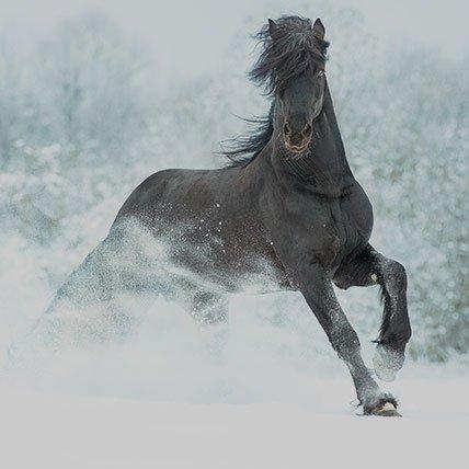 Winterdekens vanaf 165cm (Paard)